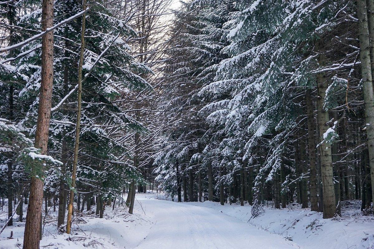 может, путешествие в зимний лес с фотоотчетом последующие ряды блоков