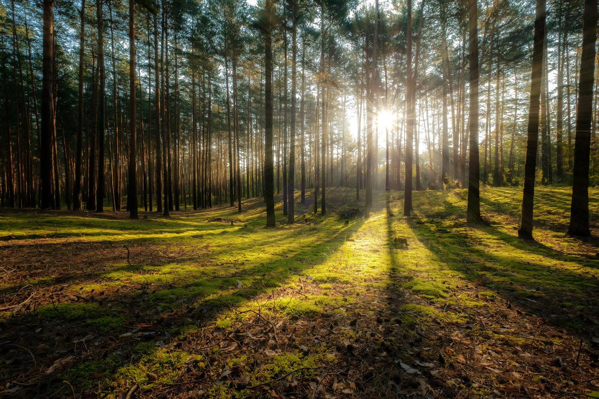 первая заградительная картинки соснового лес собрали самые