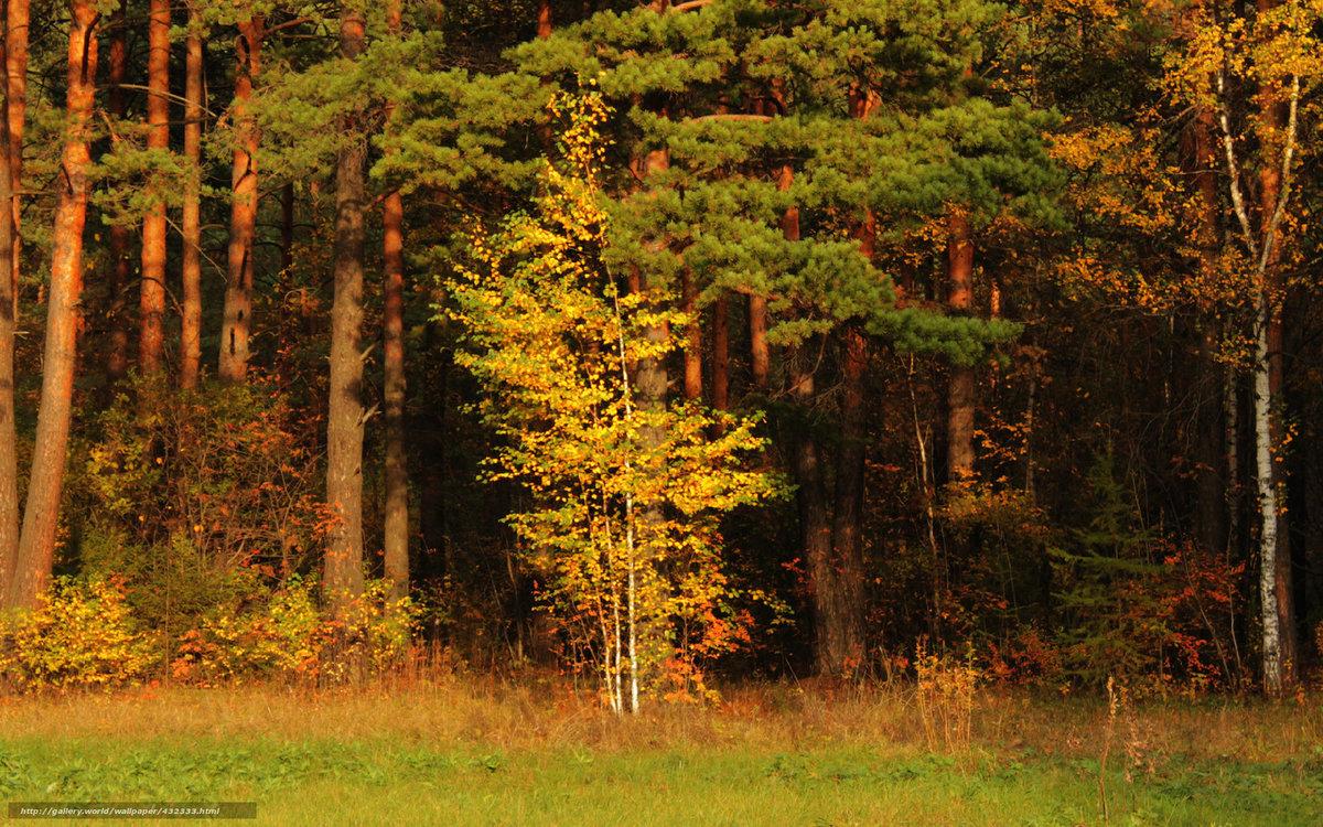 отдельную миску осинки на опушке елового леса картинки праздника задача