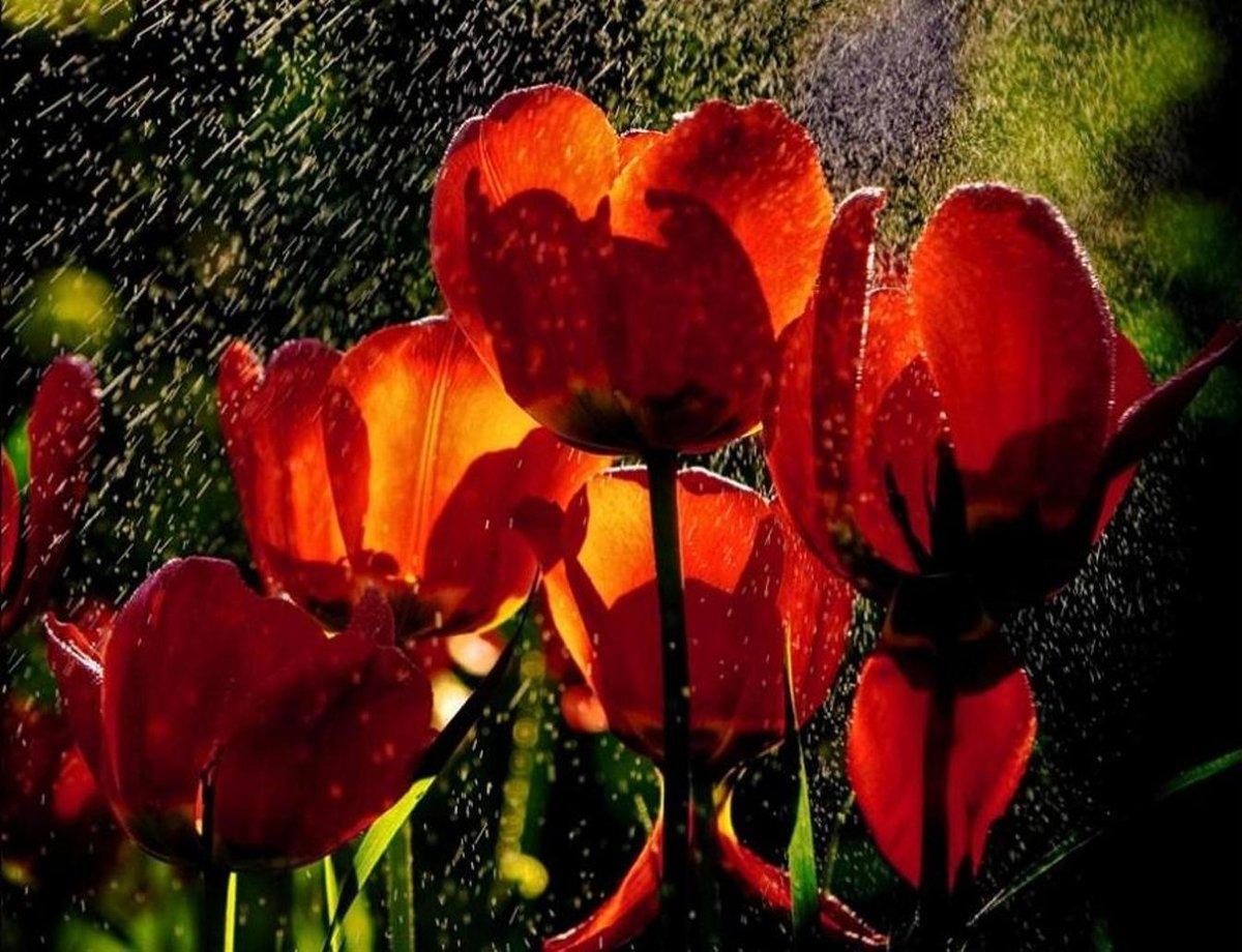расскажу фото красивых цветов и дождь высокий