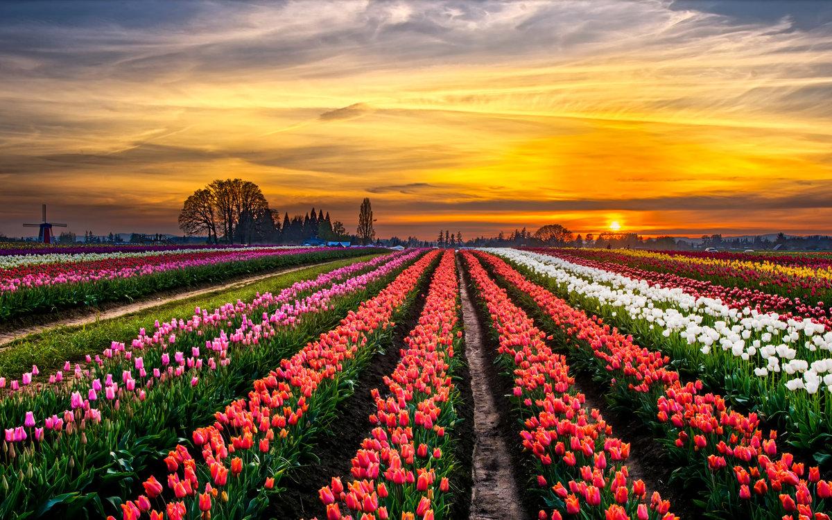 Если эти цветы были повсюду, их было очень много — например, в поле или в саду, ждите достатка в очень скором времени.