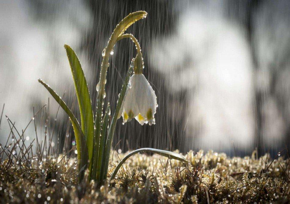 Дождливое весеннее утро фото