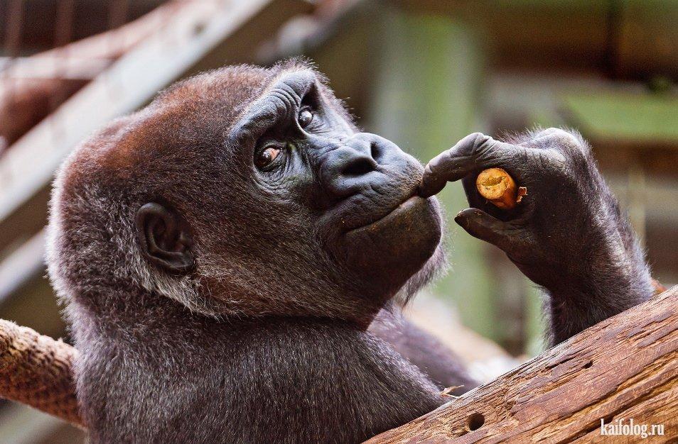 Смешные приколы животных фото