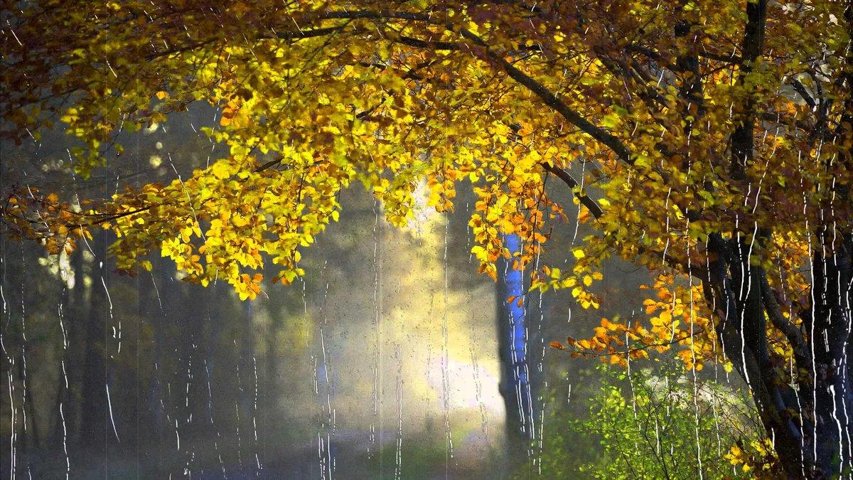 Золотой дощ фото, порно фото крупным планом черных поп