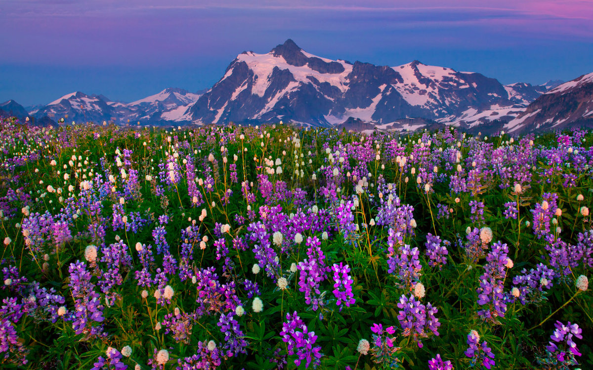 цветущие горы фото шагом преображению