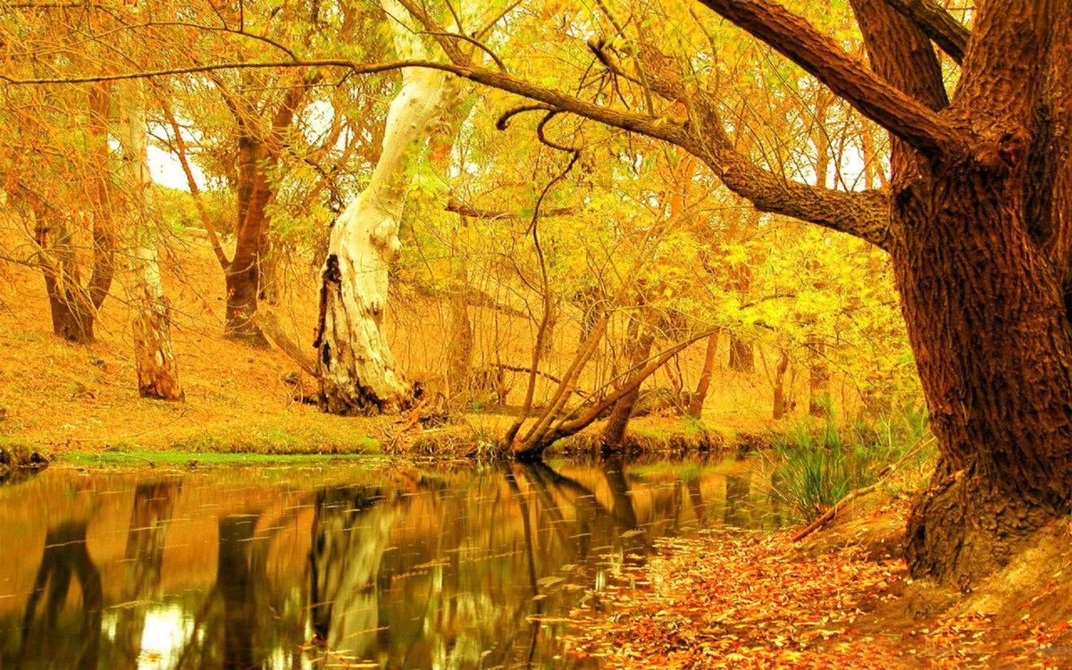 Золотая осень картинки обои