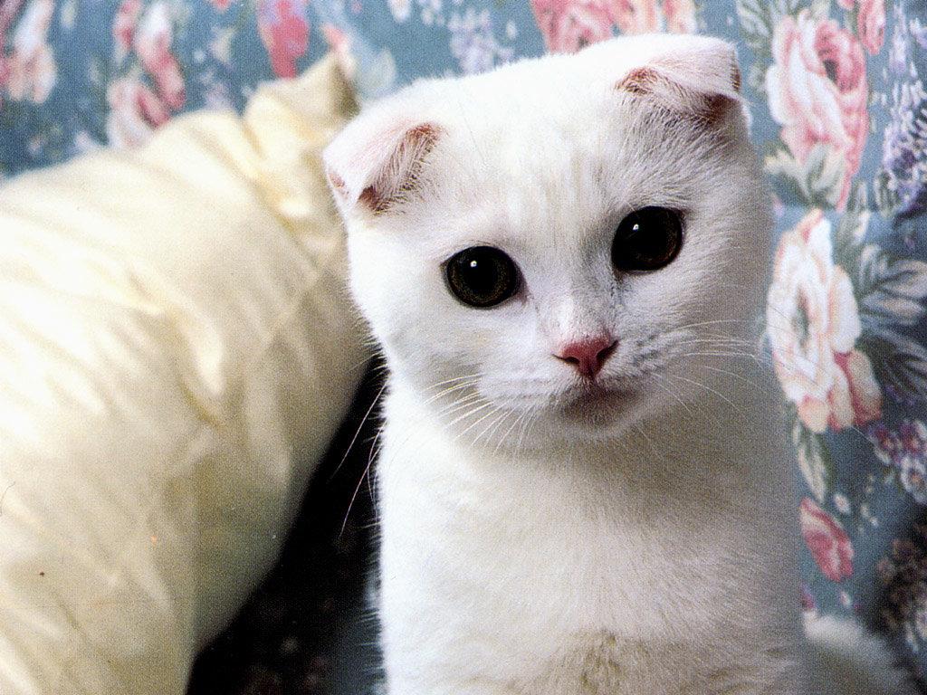 Картинки самый красивый кот на земле, марта