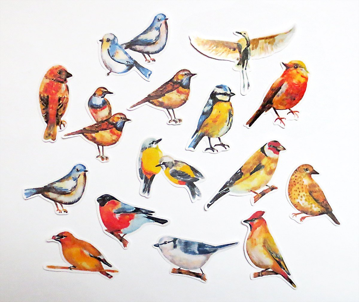 цветные картинки с птичками имени