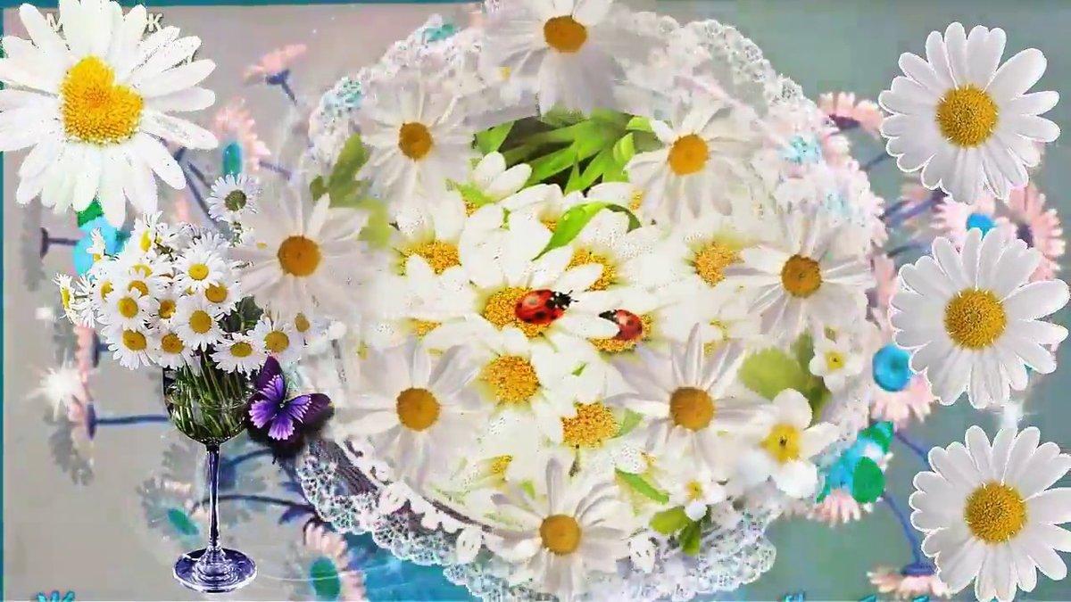 Ромашки с днем рождения картинки красивые, отправить открытку