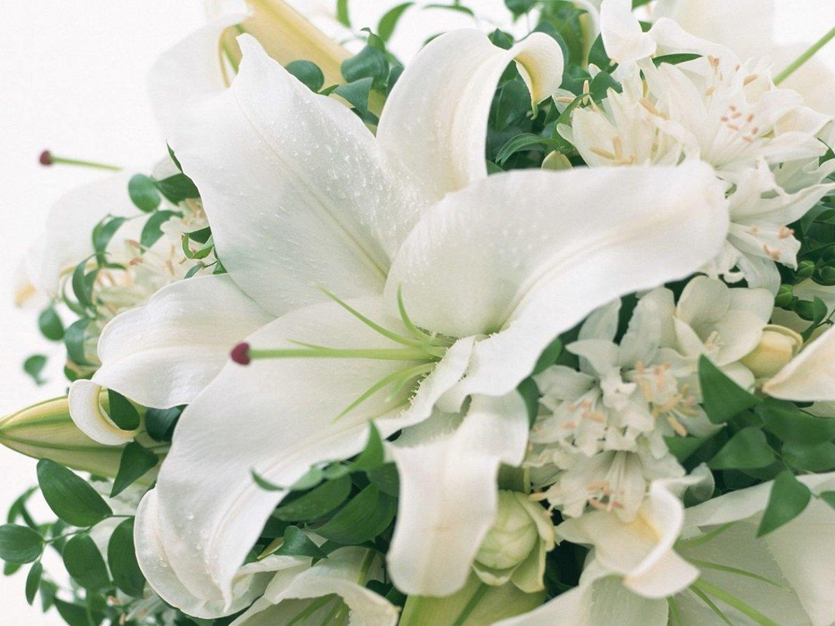 Картинки записи, цветы лилия открытка