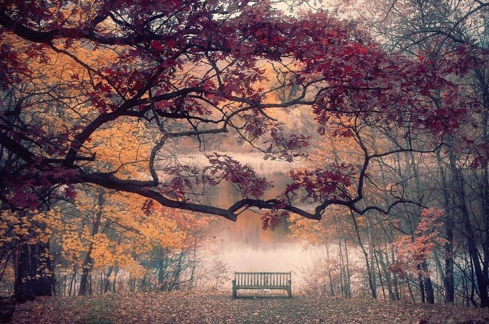 Осенний лесной пейзаж, туман укутывает деревья и  скамейку у воды