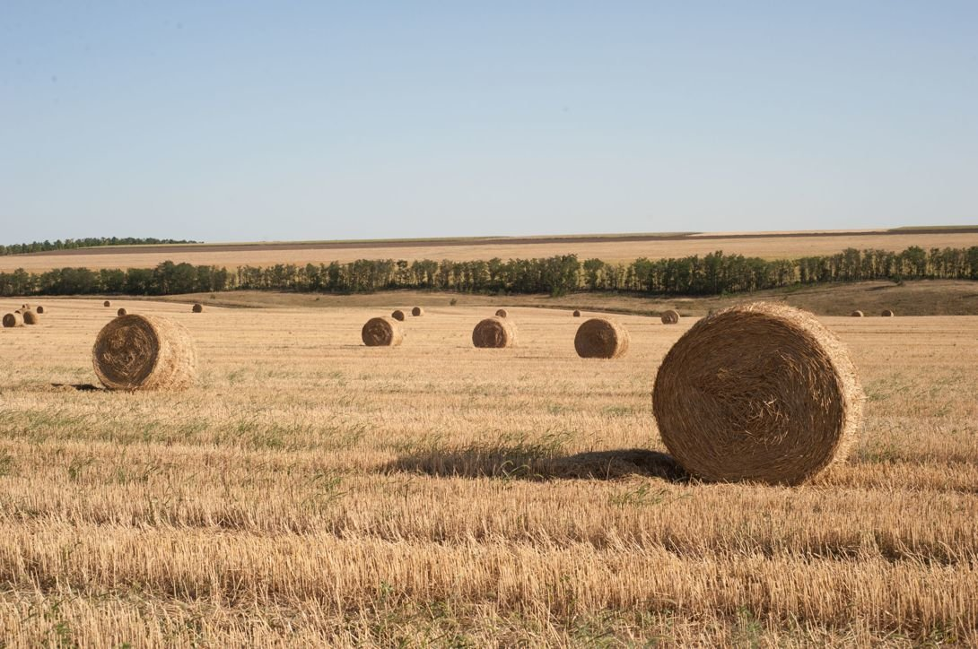 Картинки тамбова поле
