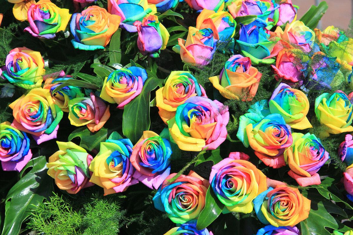 Радужные картинки с цветами
