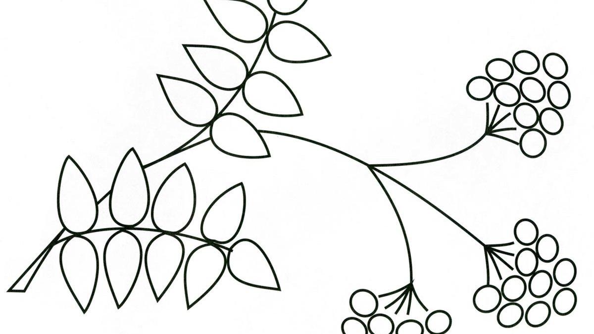 «Раскраска ветка рябины. Распечатать картинки для детей ...