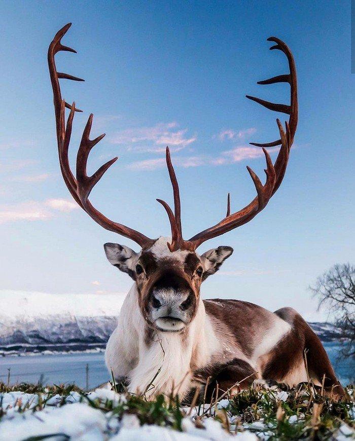 куртка это рога животных фото собрали для вас