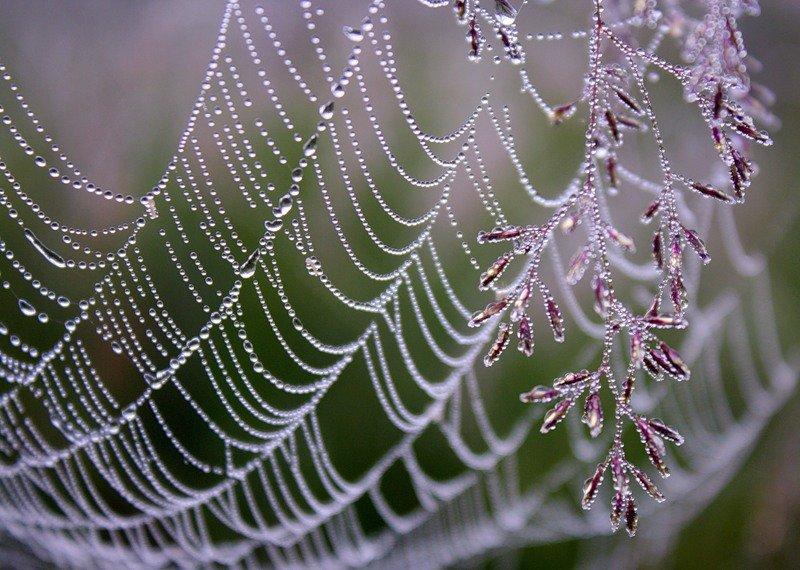 Картинка росы на паутине