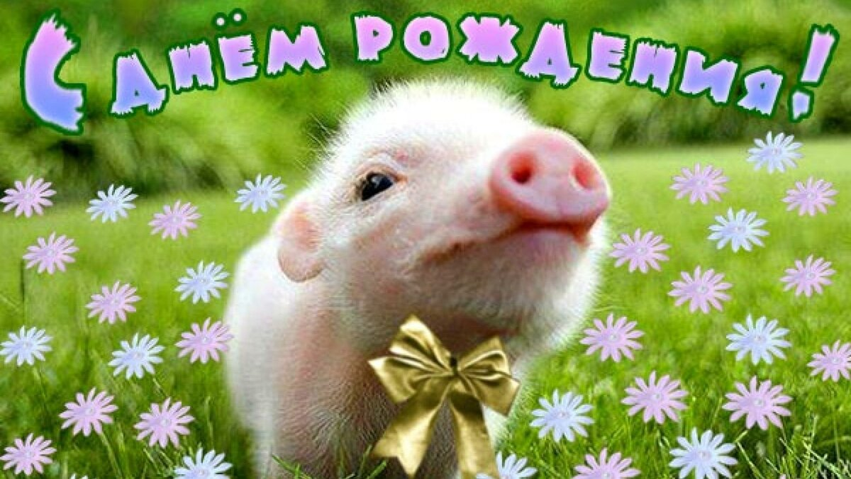 Для презентаций, с днем рождения картинки прикольные с животными