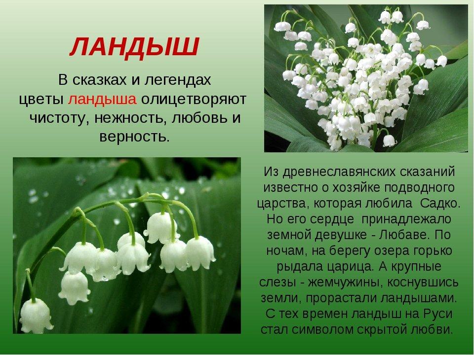 Картинки с текстом про цветы, картинках