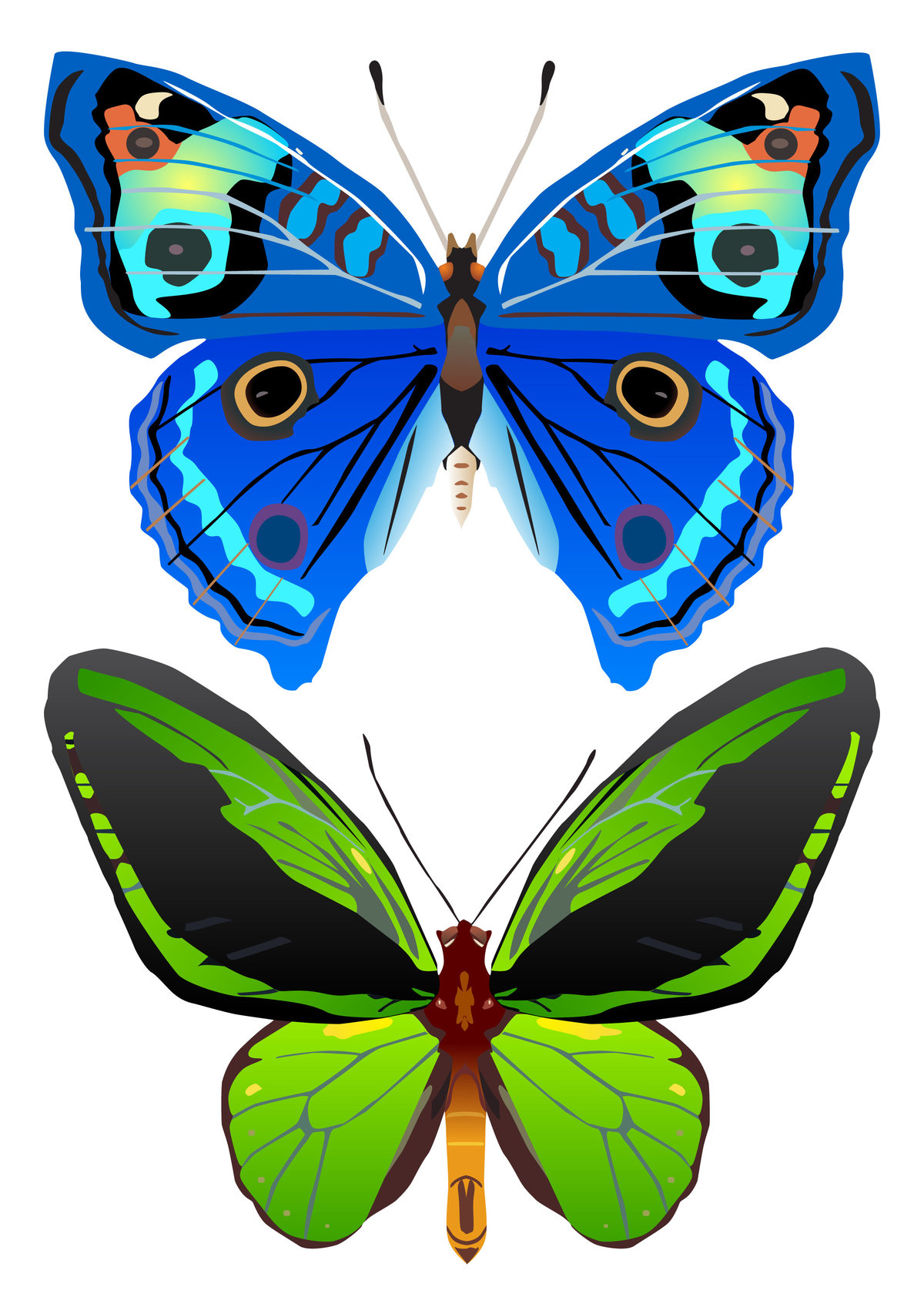 Гофрированной бумаги, картинка бабочки для вырезания распечатать цветные