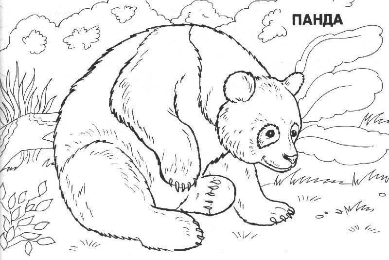 Рисунки животных которые занесены в красную книгу россии заказ