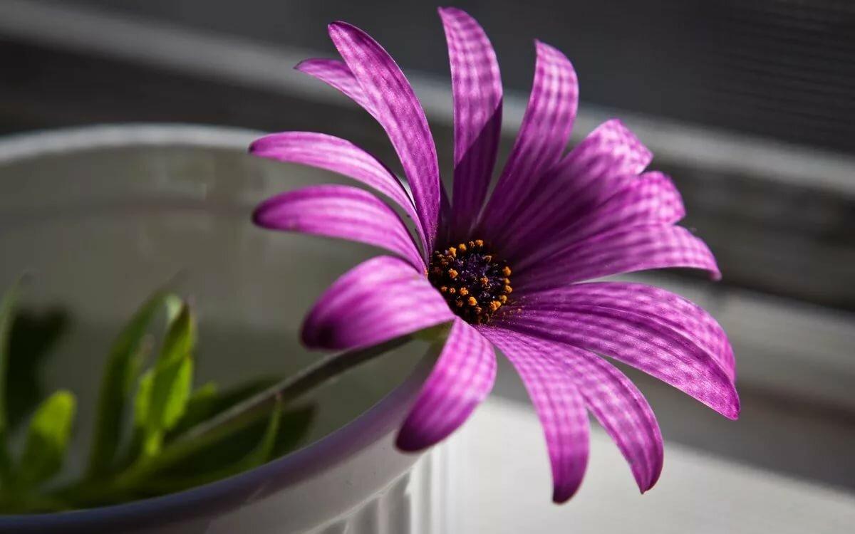 Днем, картинки цветы на телефон в хорошем качестве