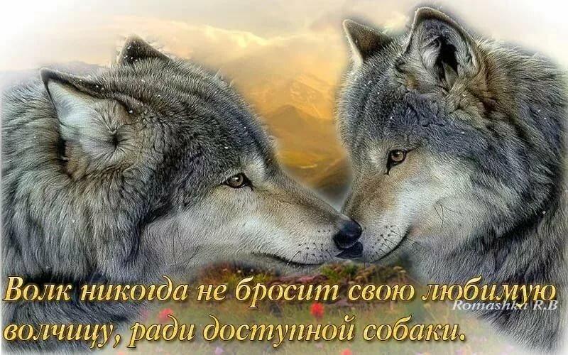 Красивые картинки волков с надписями, гифка без