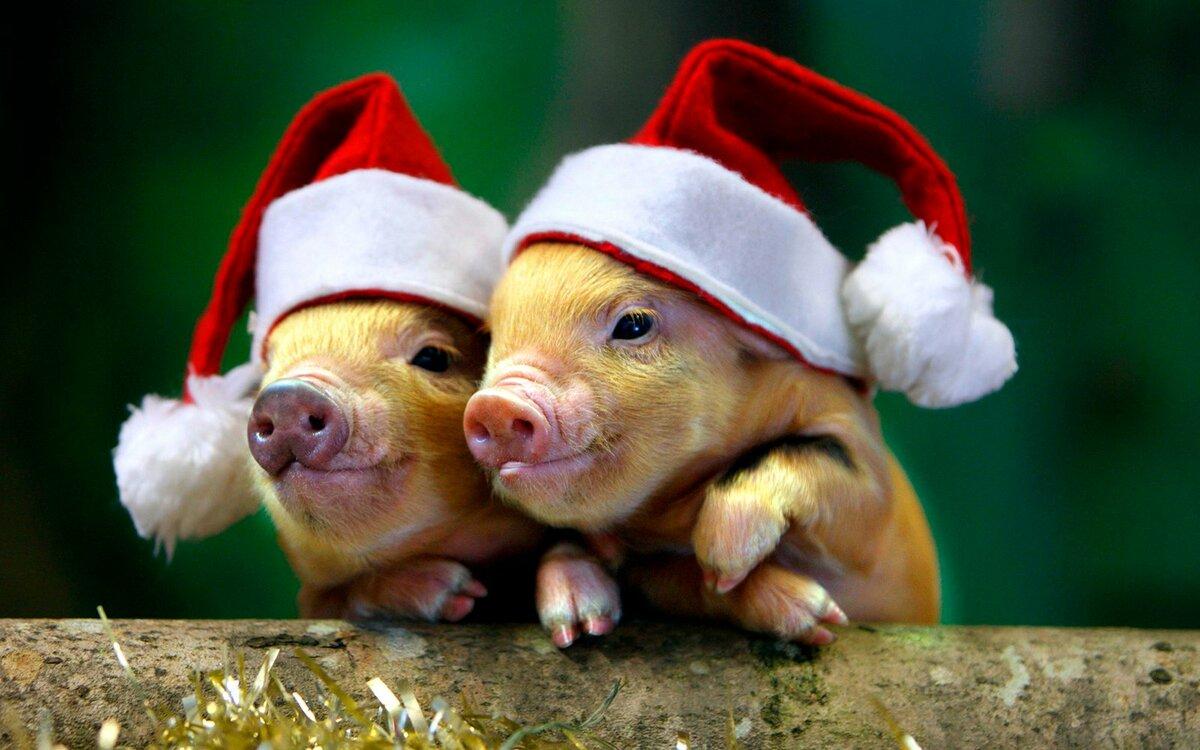 Поздравление обезьяны с новым годом свиньи все части