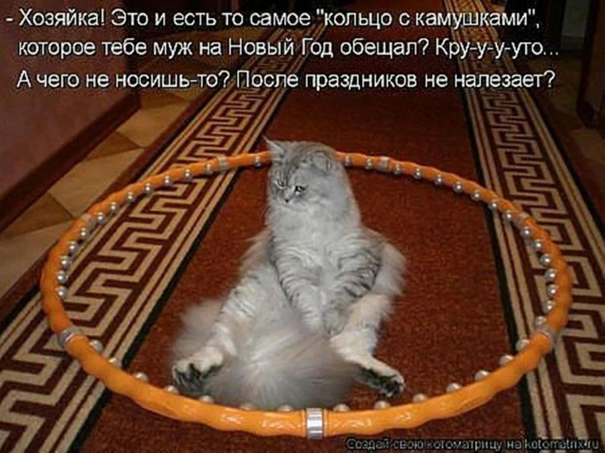 Фото, ржачные картинки про котов и кошек с надписями