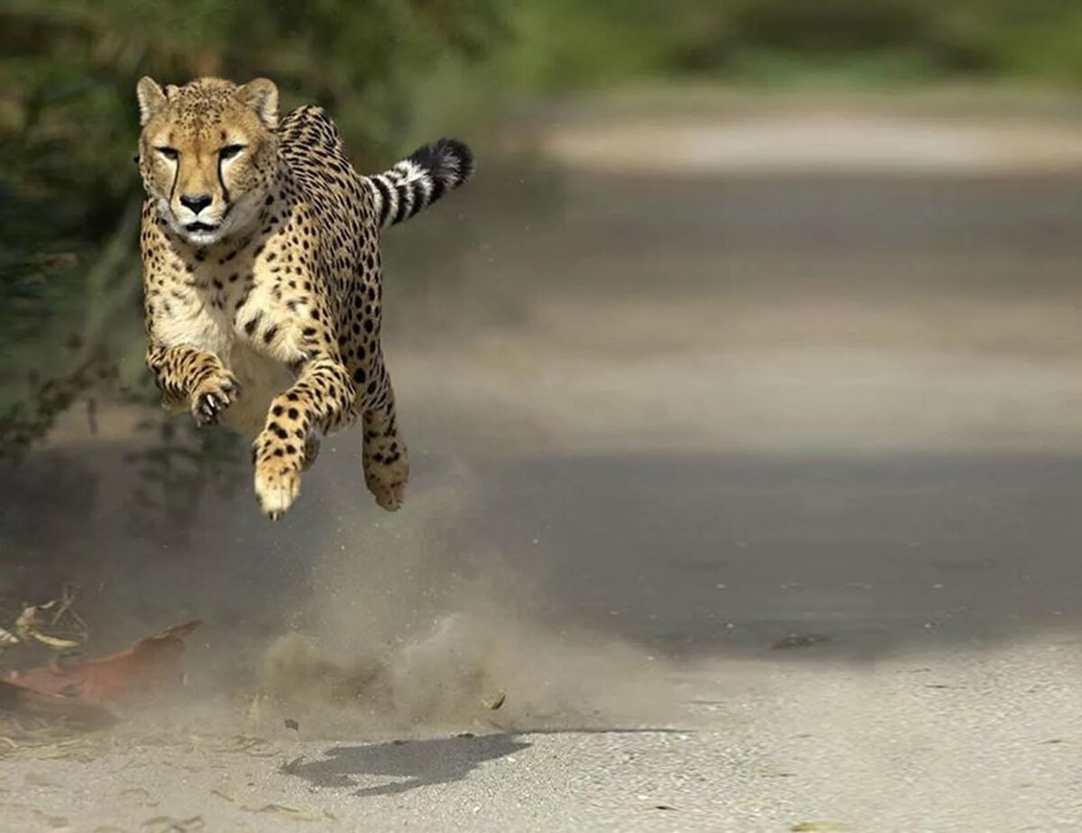Картинка животных в движении