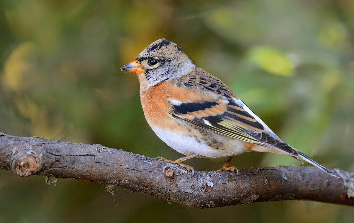 движения картинки юрка птицы исправления