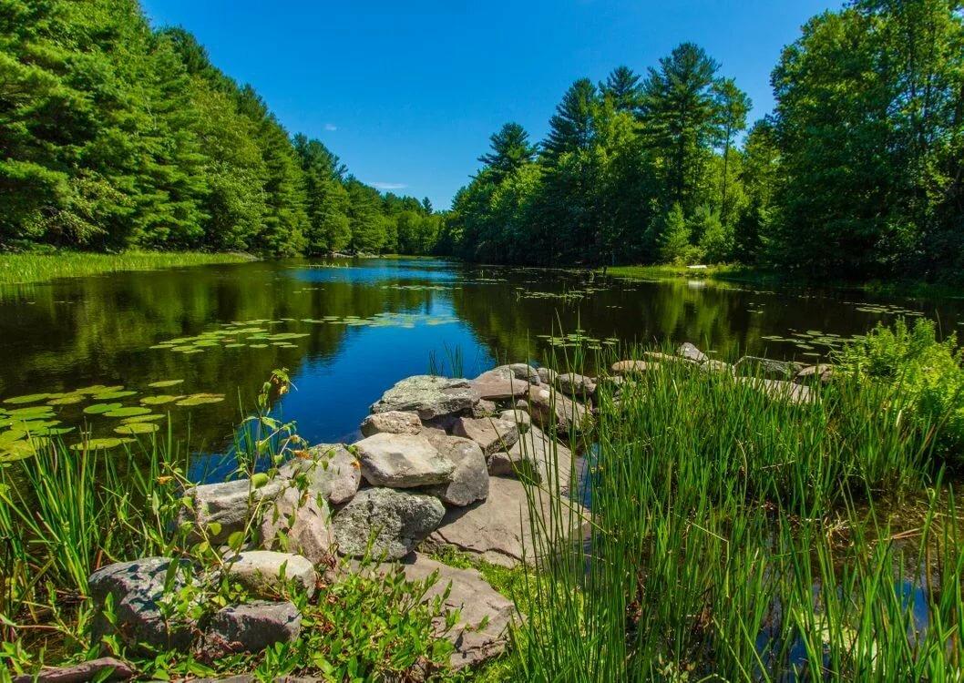 Картинки природы речка и лес