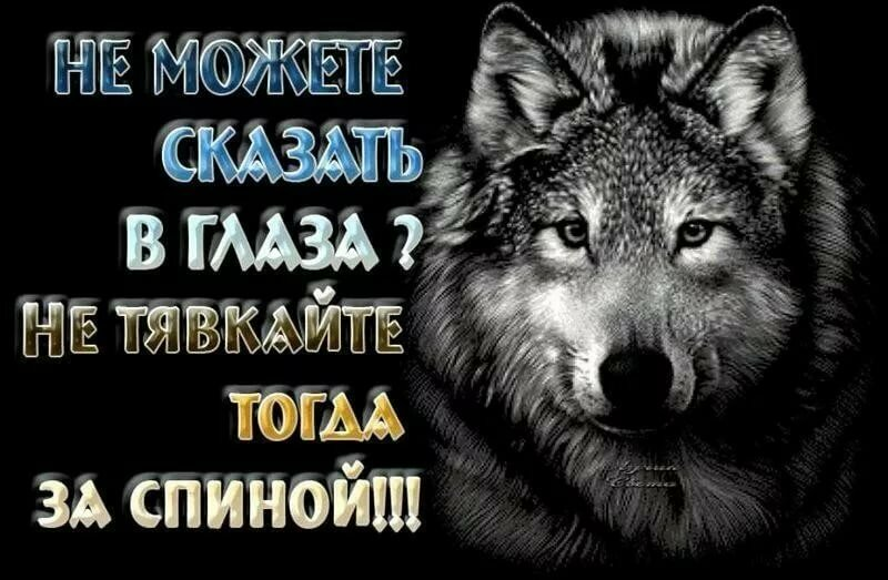 Волк картинки со статусами