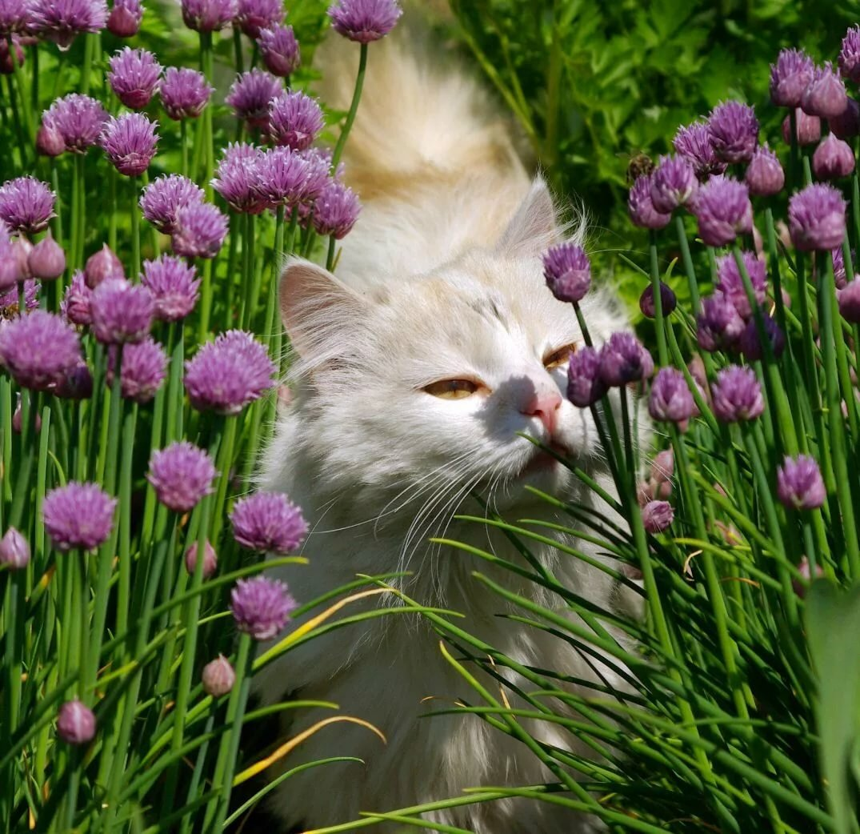 С весной котик картинки