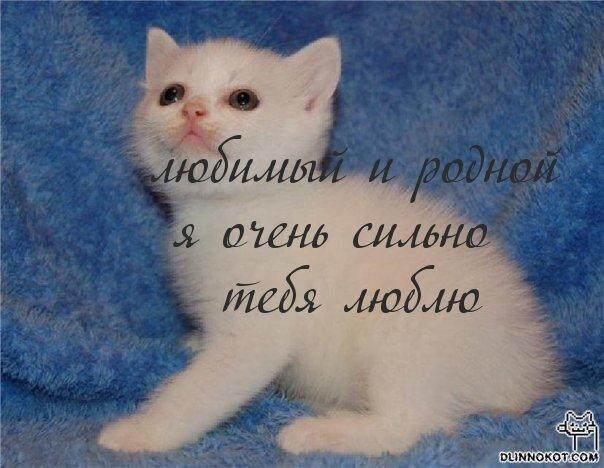 Класс открытка, картинки с надписями я тебя люблю родной