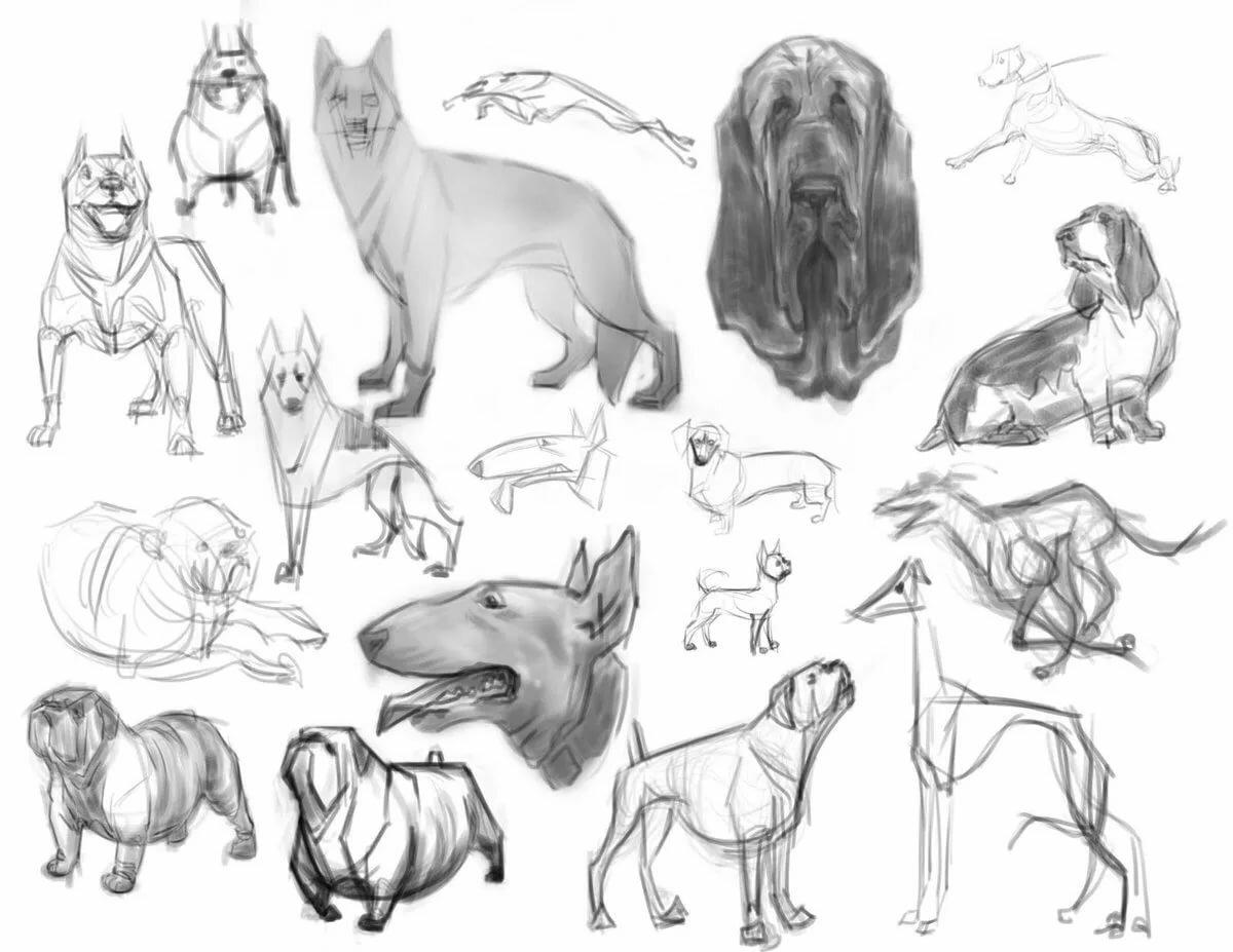 Нарисованные картинки с разными породами собак