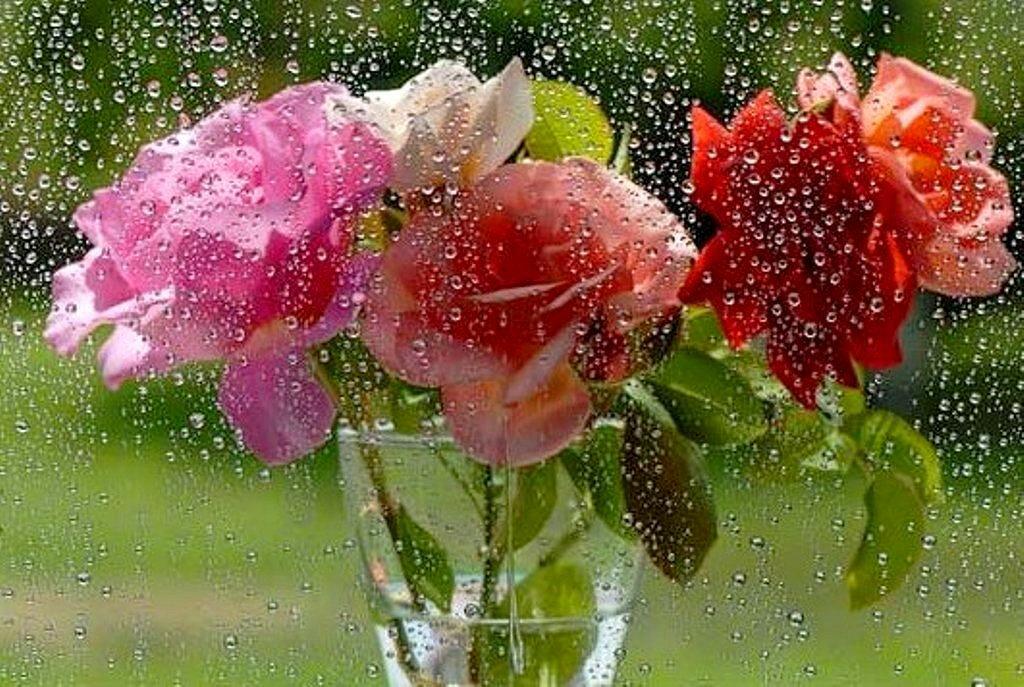 Поздравление с днем дождя