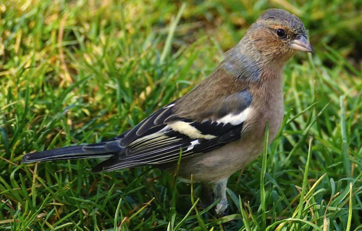 птицы летом картинки с названиями уже лет