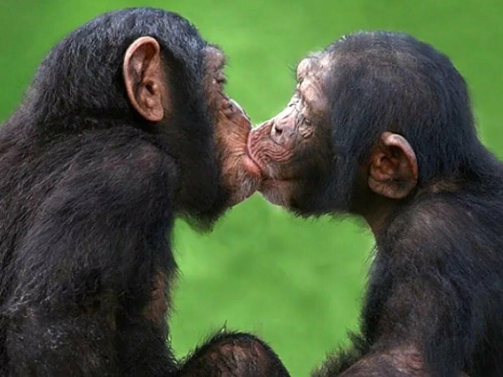 смешные картинки целующихся животных комментариях своих
