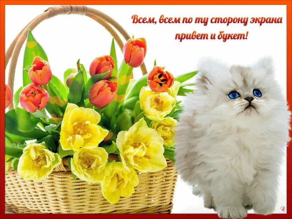 цветы фото открытки привет дворца