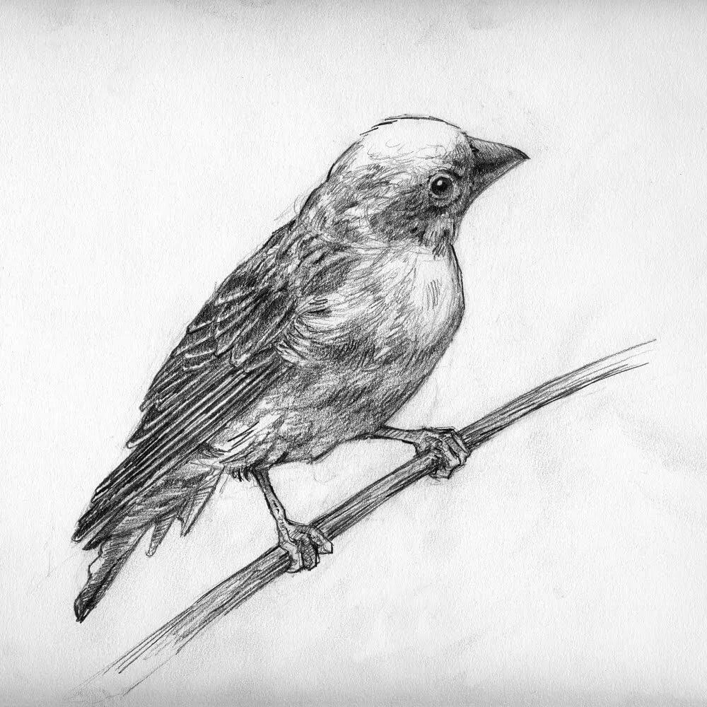 птица рисунок срисовать можно гармонично