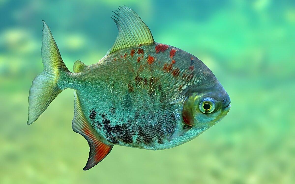 Рыбы фото красивые, открытки подручного материала