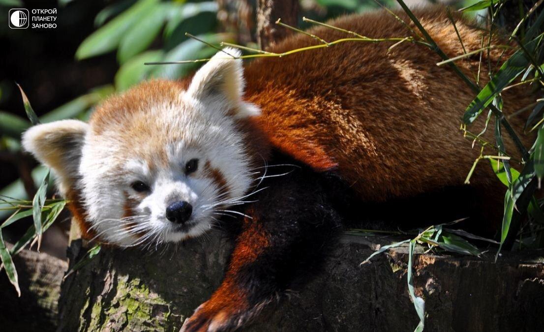 гамова фото животных которые занесены в красную книгу поза