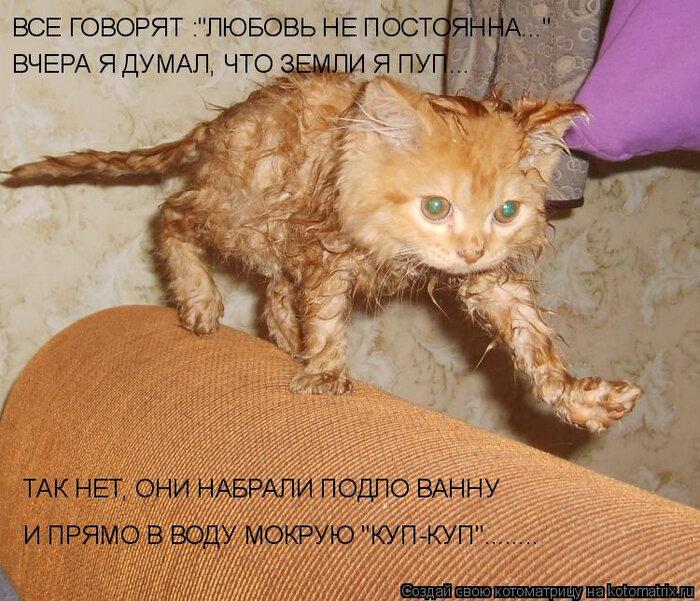 Смешные картинки котов и кошек с надписями смех, картинки про магнитики