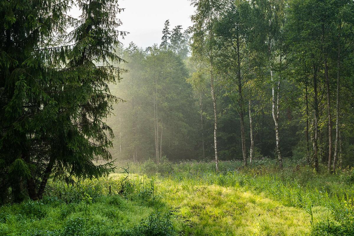 главное, фото в лесу после дождя символ