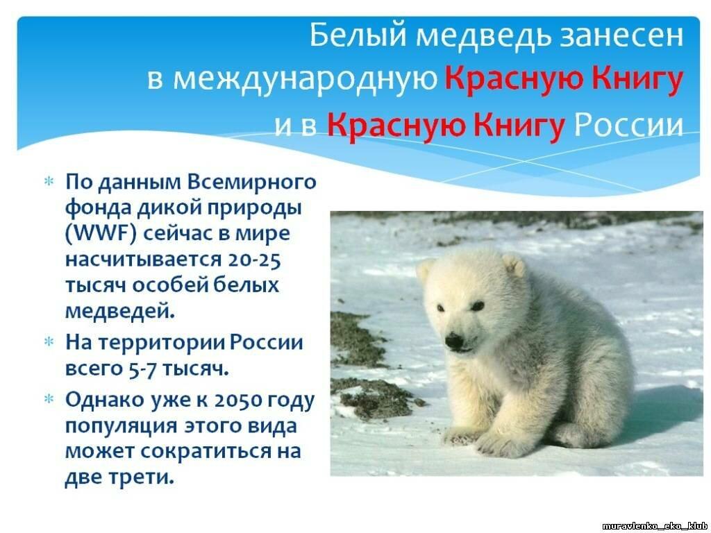 Все животные из красной книги россии