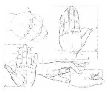 a596ed54b520 36 карточек в коллекции «Рисование рук пошагово» пользователя ...