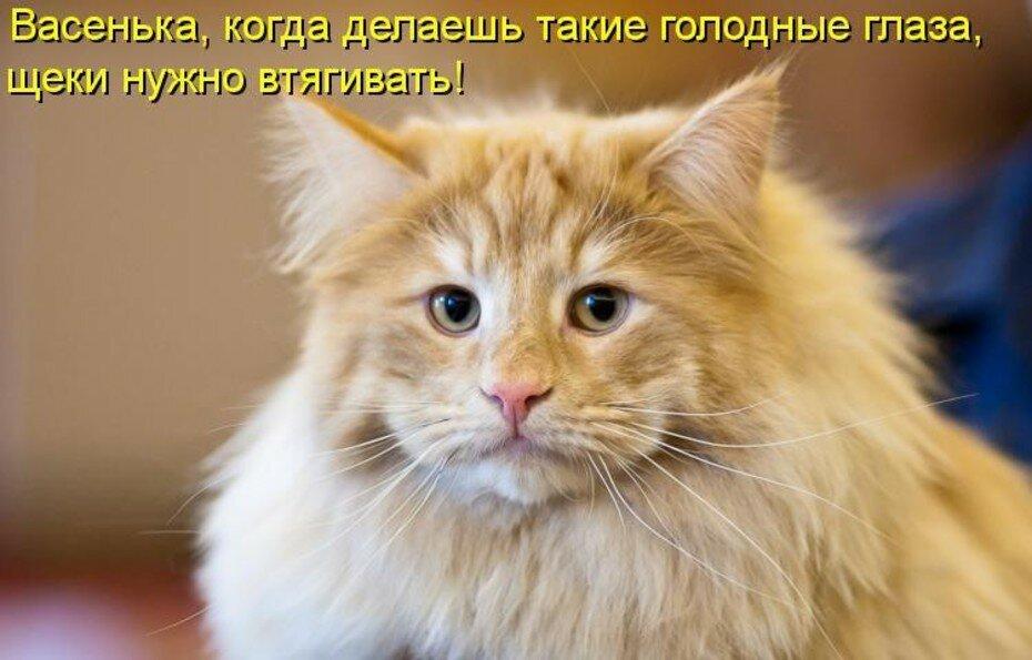 Рыжий кот картинки прикольные с надписями