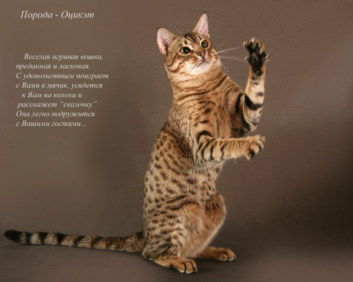 Виды кошек в картинках с названиями