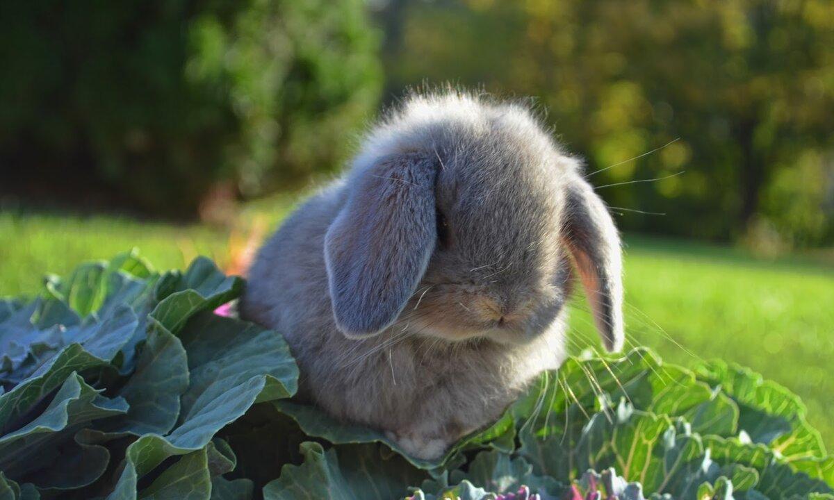 гетероцепной эластомер фото и картинки грустных зайчиков даже