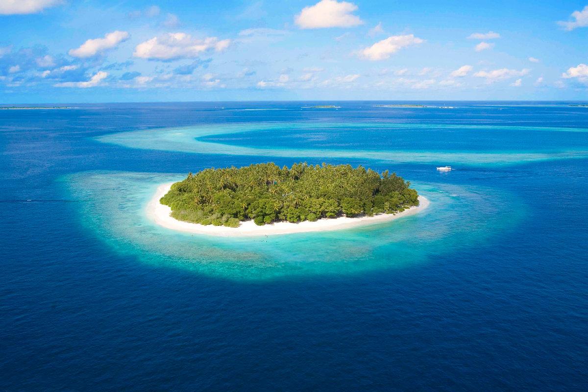 Картинки хочу туда необитаемый остров, опоссум таракан
